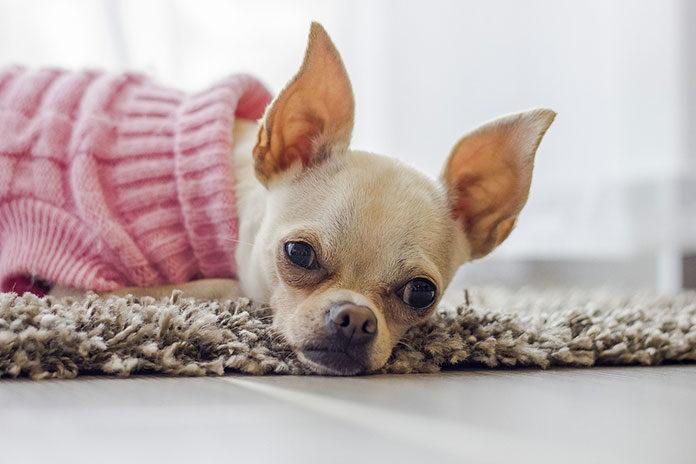 Gdzie kupować ubranka zimowe dla psów?